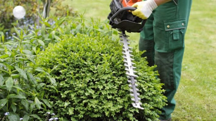 Best Petrol Hedge Trimmers UK Reviews