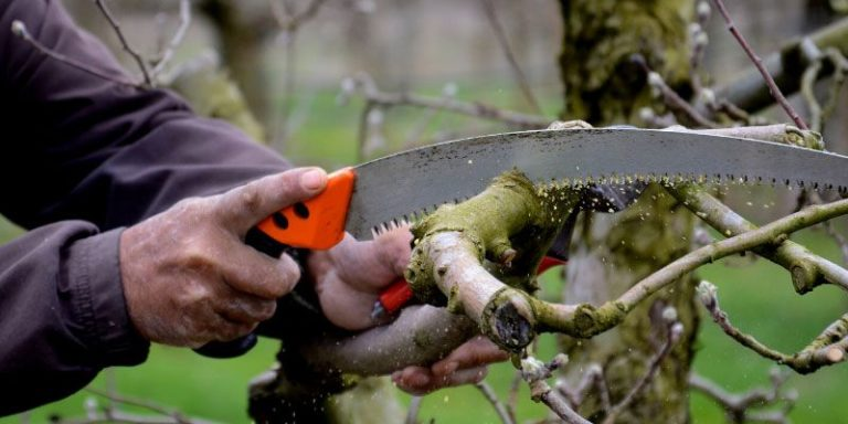 How To Use A Pruning Saw?