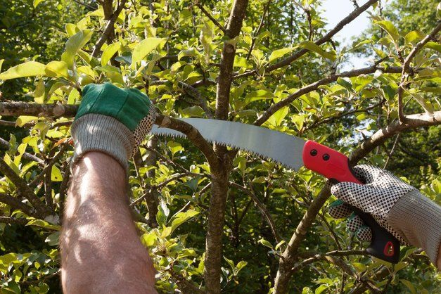 How to Use A Pruning Saw