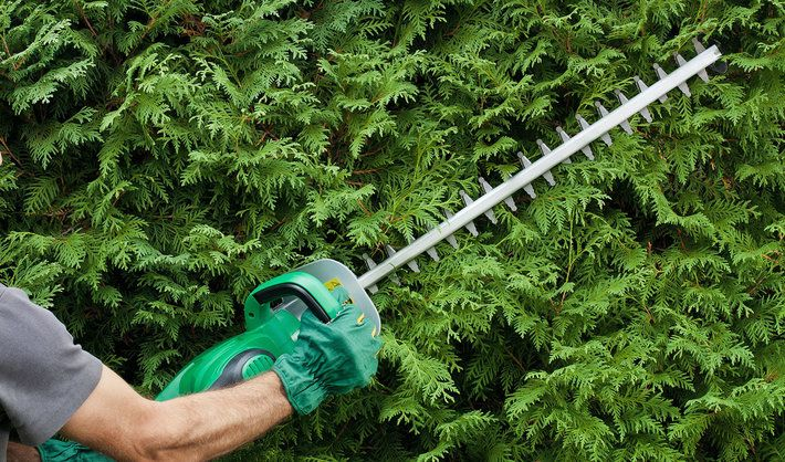 Are Electric Hedge Trimmers Any Good?