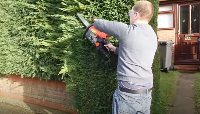 How To Cut A Hedge With A Chainsaw