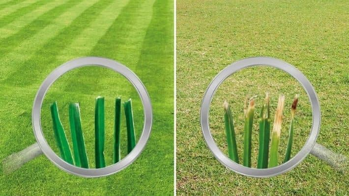 Do The Sharp Blades Of The Mower Make A Difference